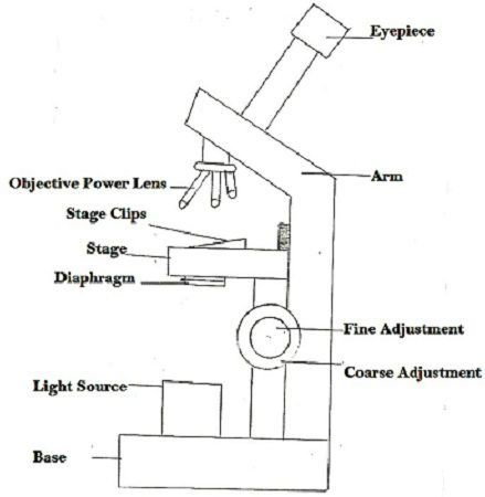 the differences between a light and electron microscope Scanning electron microscopy is discussed in light of its principles,  use of  electron microscopy in wood science  comparison between components of  the.