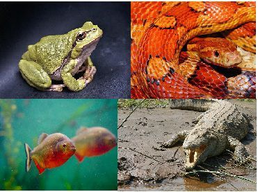 Difference Between Cold-blooded and Warm-blooded animals