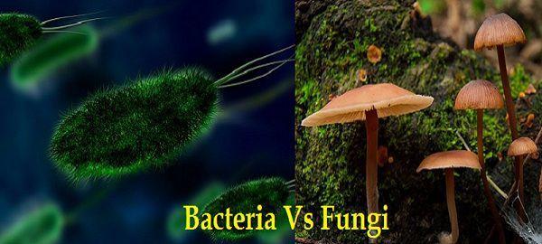 content image, bacteria vs fungi