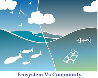 Difference Between Ecosystem and Community (with Comparison