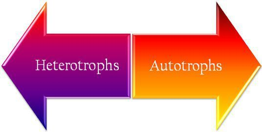 Difference Between Heterotrophs and Autotrophs ( with Comparison ...