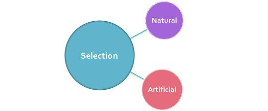 Difference between natural and artificial selection with comparison difference between natural and artificial selection with comparison chart bio differences ccuart Image collections