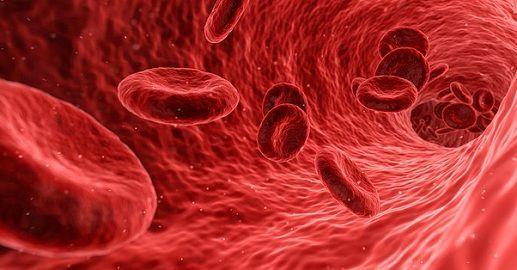 hemoglobin_Vs_myoglobin_content