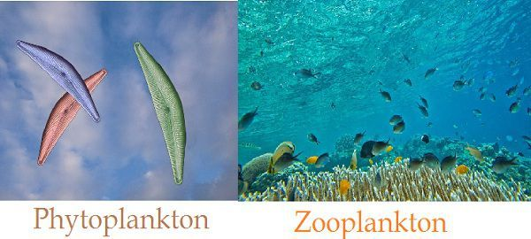 Phytoplankton_Vs_Zooplankton