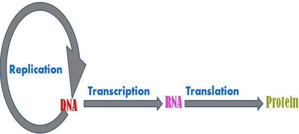 content_replication_vs_transcription_img