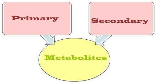 Primary_vs_secondary_metabolites_content