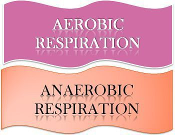 content_image_aerobic_Vs _anaerobic