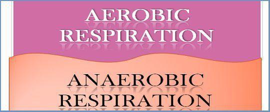 aerobic respiration examples