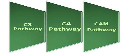 Difference Between C3, C4 and CAM pathway (with Comparison Chart ...