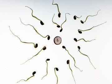 Sperm_Vs_Ovum_content