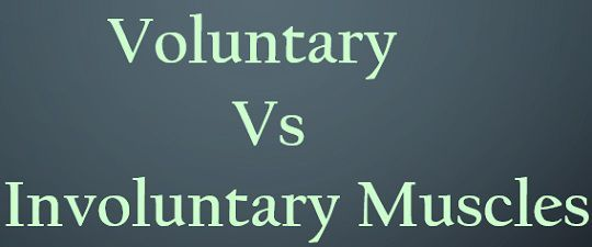 Difference Between Voluntary And Involuntary Muscles  With