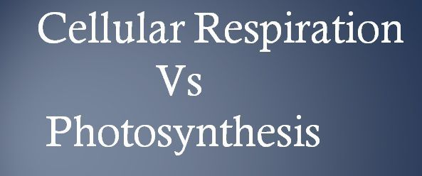 Cellular respiration_Vs_Photosynthesis_img_content