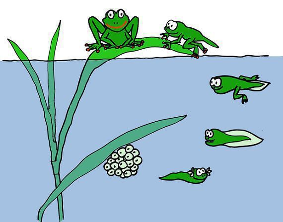 Difference Between Amphibians and Reptiles (with Comparison