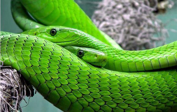 reptiles_content