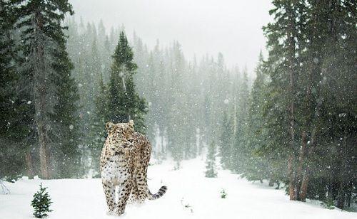 Animals_img