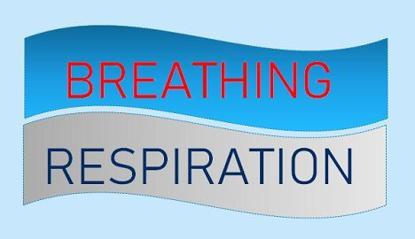 Breathing_vs_rspiration_img