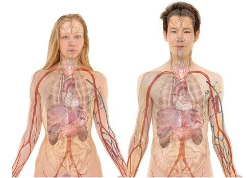 anatomy_img