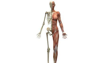 actin_vs_myosin
