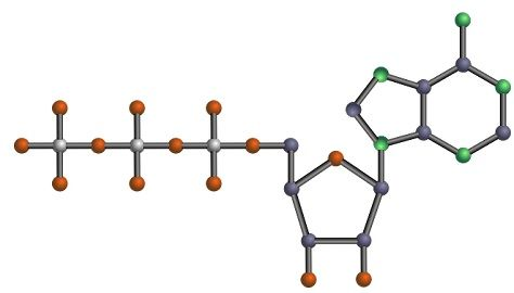 Purines_vs_pyrimidines_img1
