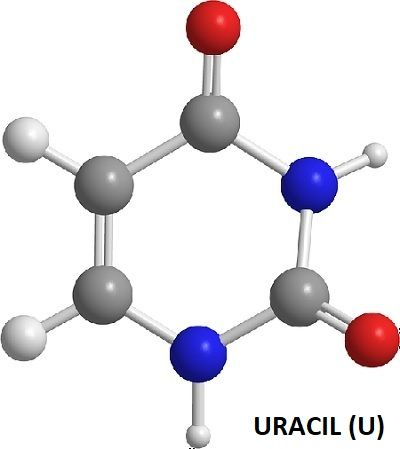 uracil_pyrimidines45