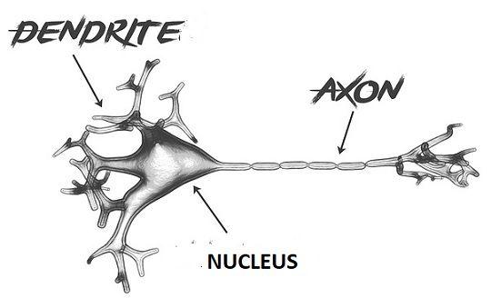 axon_vs_dendrites_content_img